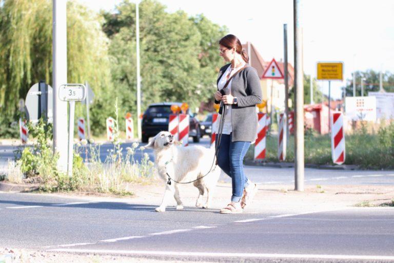 Frau mit Golden Retriever Hund im Straßenverkehr