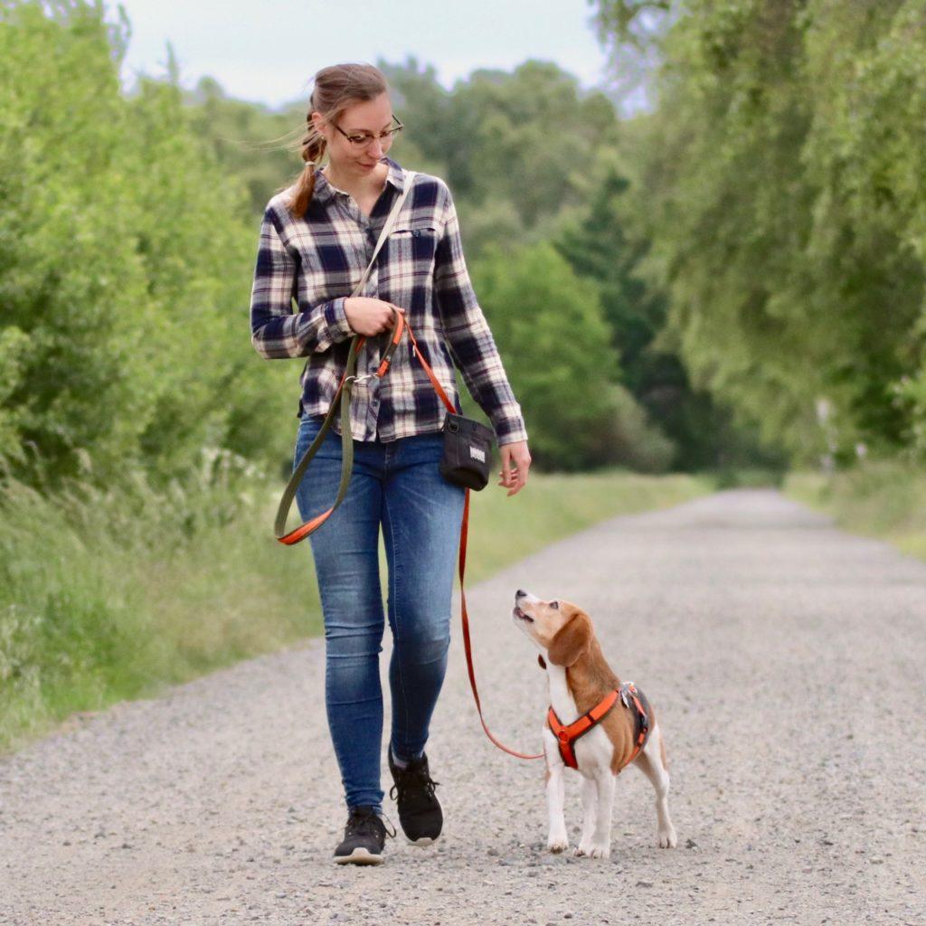 Frau trainiert Beagle Hund_Quadrat