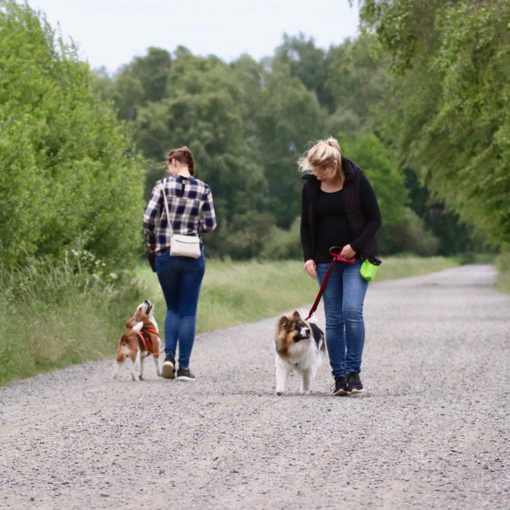 Zwei Frauen trainieren Hunde_Quadrat