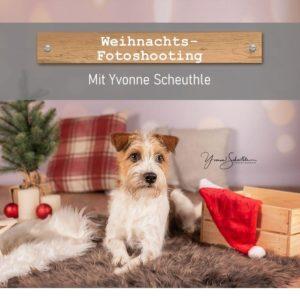 Hund mit Weihnachtsdeko im Hintergrund